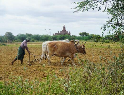Myanmar: Bagan ve Mandalay