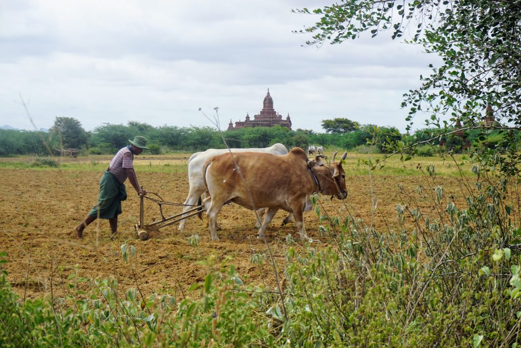Myanmar: Bagan ve Mandalay